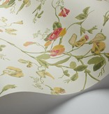 Cole-Son Sweet Pea Pink, Yellow (Roze, Geel, Groen) 100/6027 Wallpaper