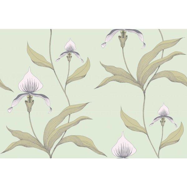 Orchid Lichtgroen En Lichtroze 66/4028