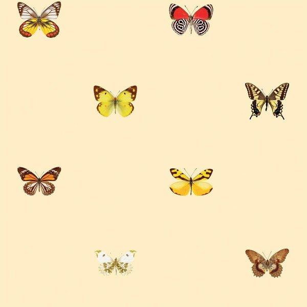 Butterflies - warm colors NATR20001015