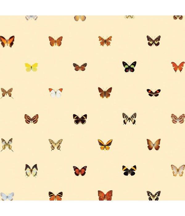 Naturalis Originals Butterflies - warm colors NATR20001015