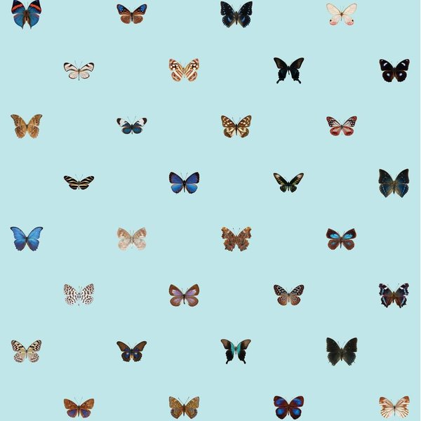 Butterflies - cool colors NATR10001015