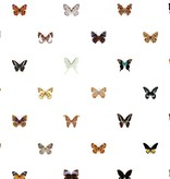 Naturalis Originals 160 different butterflies NATR00401015