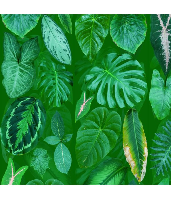 Naturalis Originals Leaves on a green background NATR00321015
