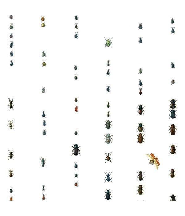 Naturalis Originals Beetles from the German Empire NATR00201015