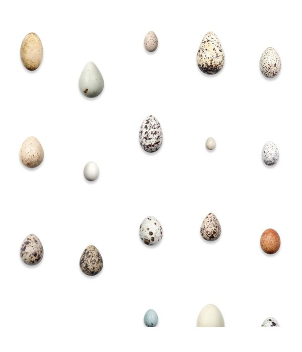 Naturalis Originals European bird eggs NATR00180916