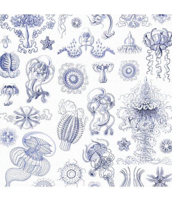 Naturalis Originals Delft blue jellyfish by Ernst Haeckel NATR00170916