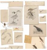 Naturalis Originals Joseph Wolf's birds NATR00021015