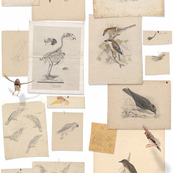 Joseph Wolf's birds NATR00021015