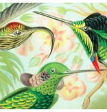 Naturalis Originals Hummingbirds by Ernst Haeckel NATM01051015