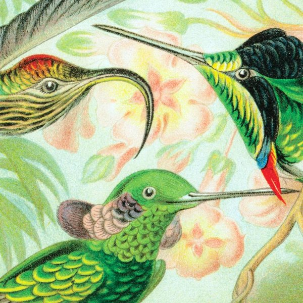 Hummingbirds by Ernst Haeckel NATM01051015