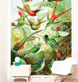 Naturalis Originals Hummingbirds by Ernst Haeckel NATM01051015