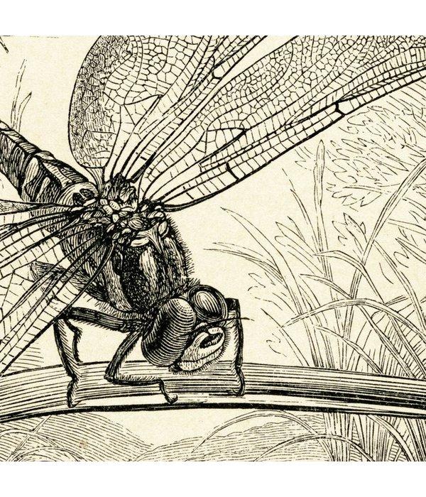 Naturalis Originals Dragonflies NATM01011015