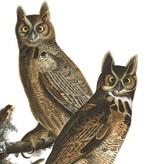 Naturalis Originals Composition of owls by James Audubon NATM00220916