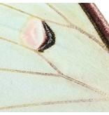 Naturalis Originals Indian luna moth NATM00090916