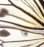 Naturalis Originals Idea Leuconoe NATM00080916