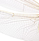 Naturalis Originals Big dragonfly NATM00070916