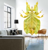 Naturalis Originals Walking leaf bug NATM00060916