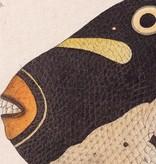 Naturalis Originals Clown triggerfish by Kawahara Keiga NATM00040916