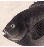 Naturalis Originals Black fish by Kawahara Keiga NATM01071015