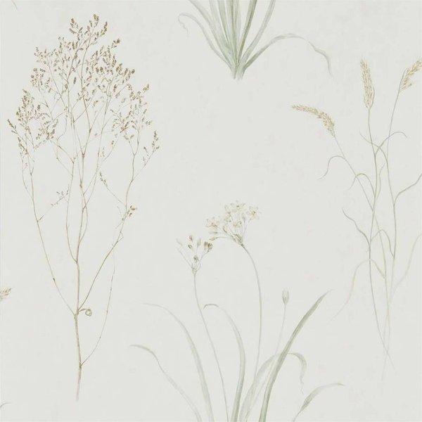 FARNE GRASSES 216488