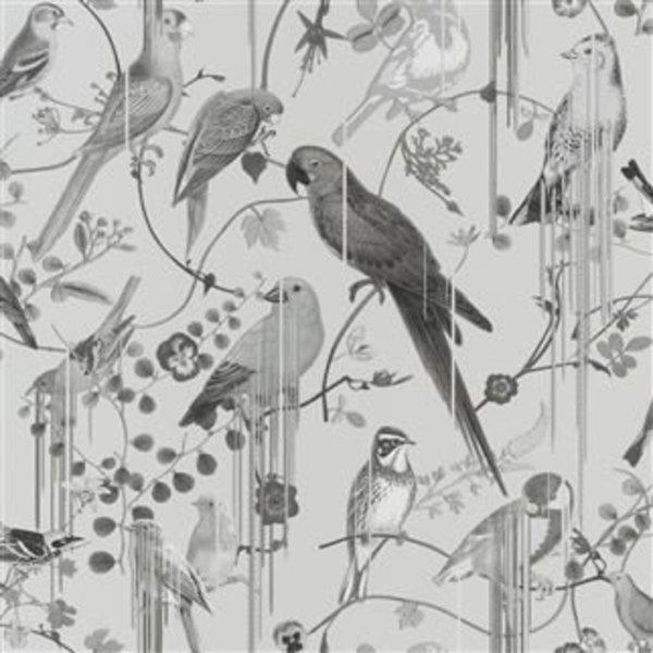 BIRDS SINFONIA GRAPHITE PCL7017/08