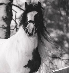 Cowboy Magic Witte paarden pakket