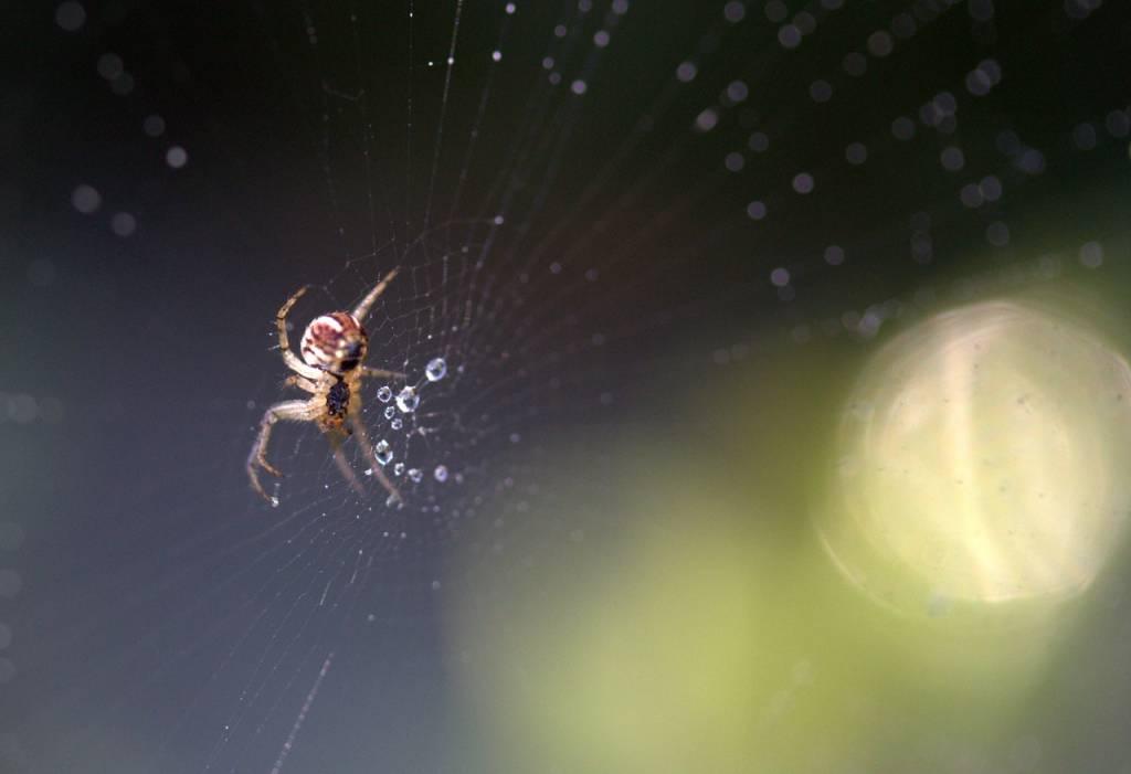 Spinnen in huis: hoe kom ik er vanaf?