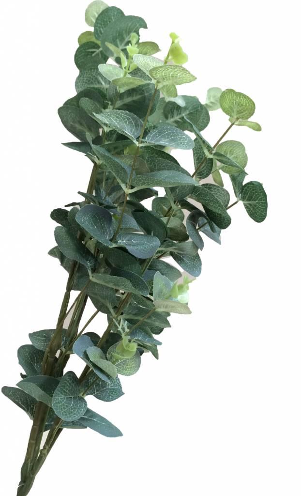 GeWoon Eucalyptus s-2 80 cm