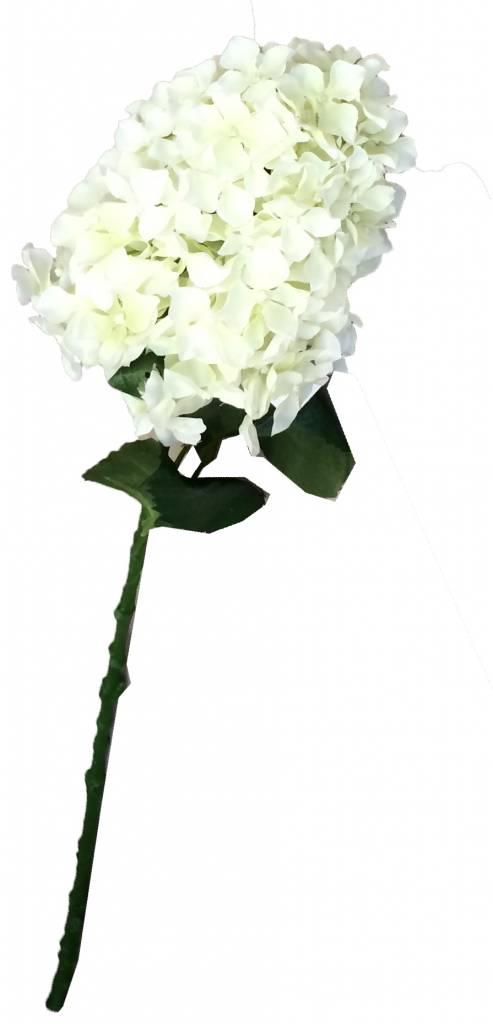GeWoon Witte Hydrangea - 80 cm
