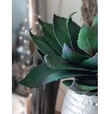 GeWoon Kunstplant Aloe - 55 cm