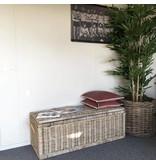 GeWoon Grote bamboeboom - H210 cm