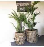 GeWoon Varen in pot - H155 cm