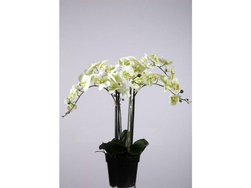 GeWoon Orchidee Wit - Ø20xH75 cm
