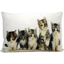 Sierkussen Kittens - 50x10xH35 cm