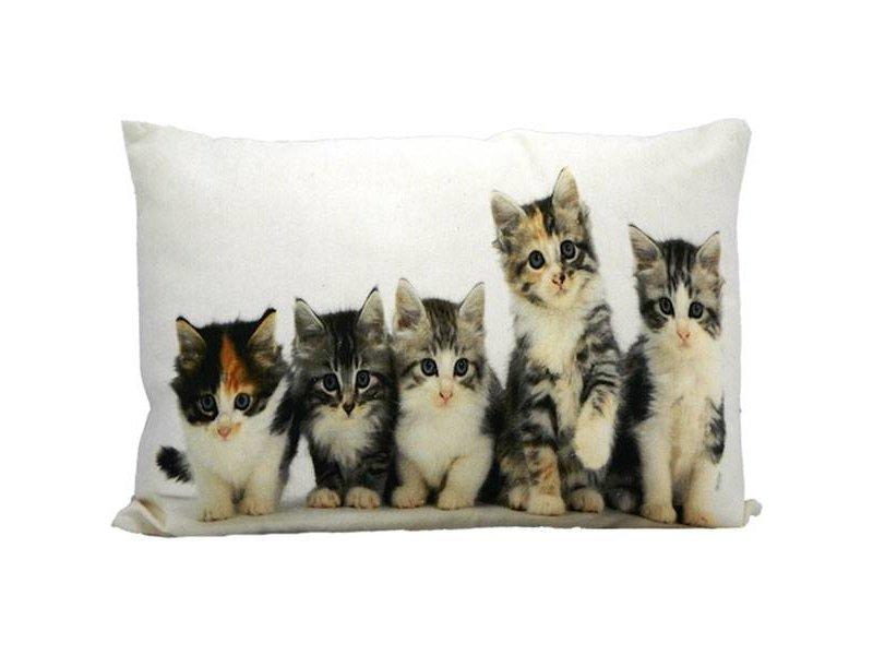 Mars & More Sierkussen Kittens - 50x10xH35 cm
