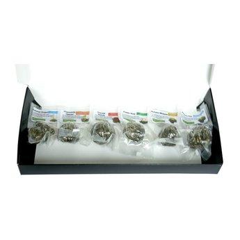 6 Teeblumen + gläsernen Teekanne JADE