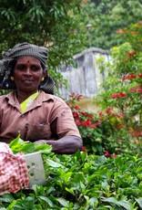 Caffè Dono - Chai Kerala