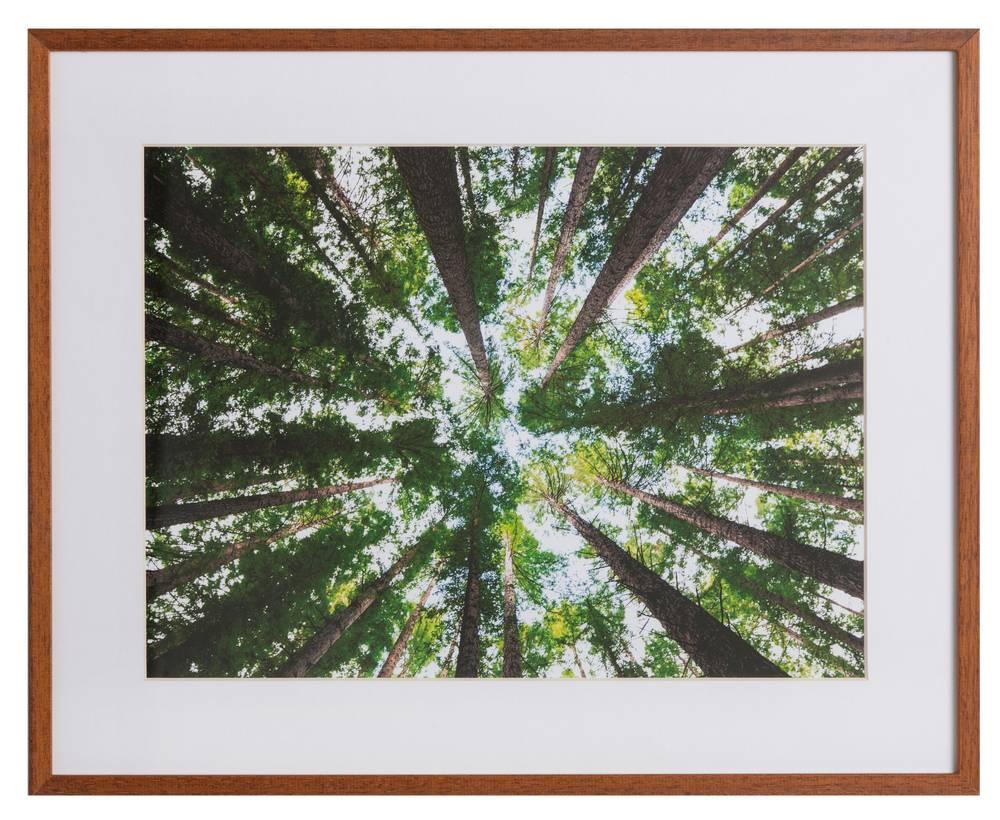 Australisch bos by Arnaud