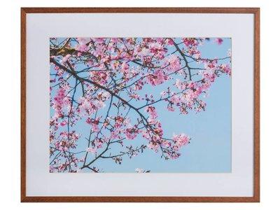 Roze Natuur by Uriel Soberanes