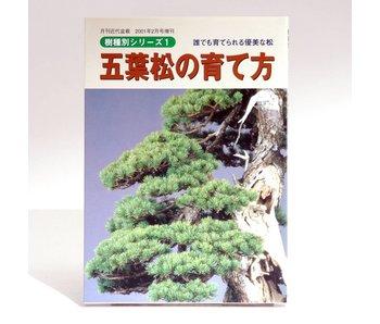 Pinus penthaphylla