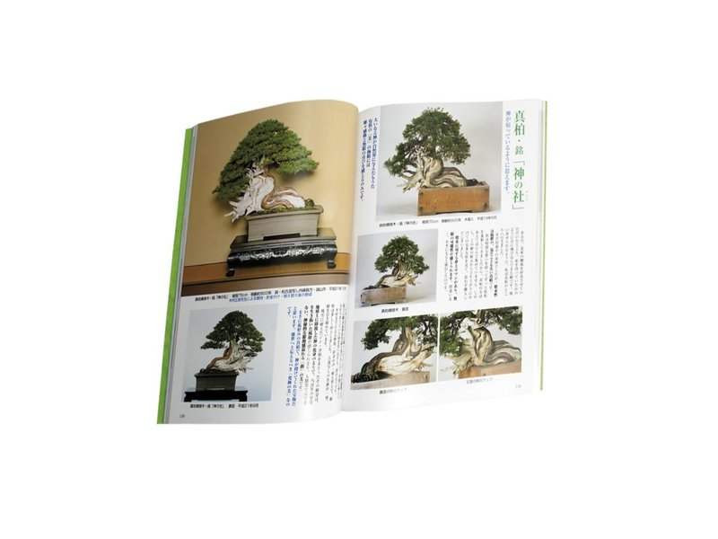 Extreme Beauty - Life devoted to Bonsai