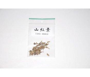 Yama Mumiji, acer palmatum bonsai seeds