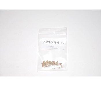 Hanamizuki, Cornus seeds