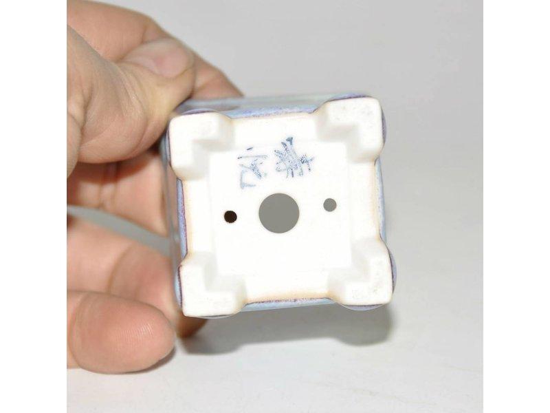 Bonsai crisol de luz azul de 5 cm
