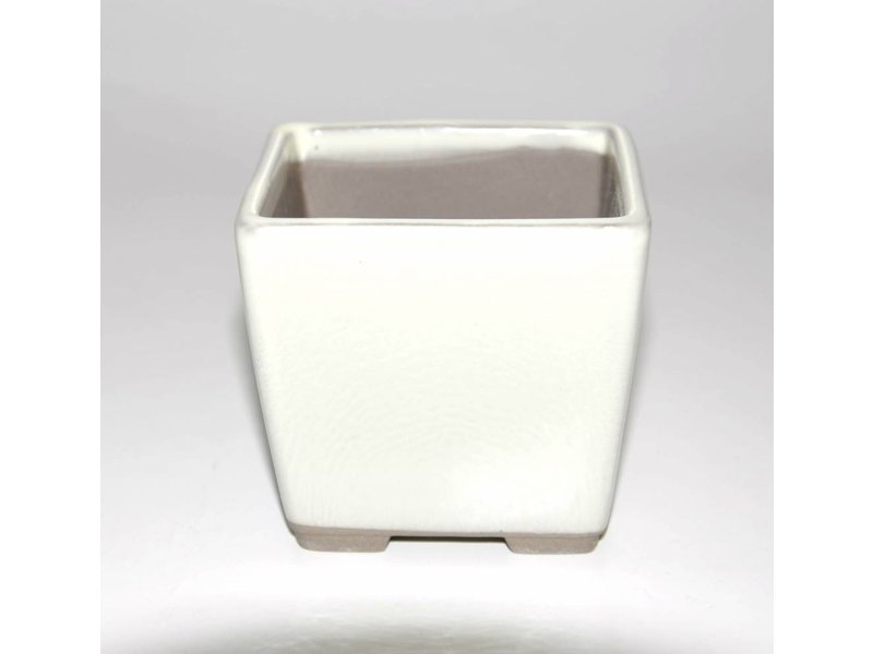 Bonsai pot white 9 cm Seto Yaki