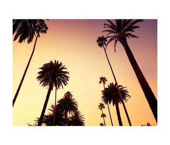 California Palm bomen behang