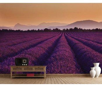Fotobehang lavender