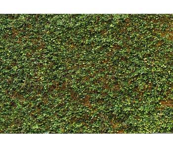 Fotobehang Efeu-Wand 366x254 cm