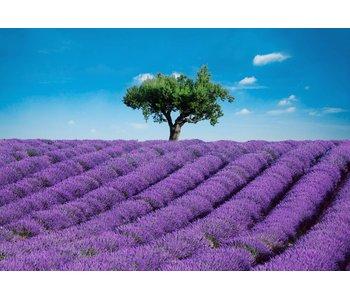 Fotobehang Provence 366x254 cm