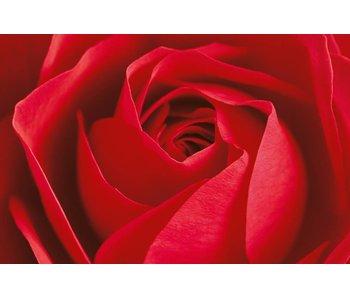 Fotobehang L'important c'est la Rose 175x115 cm
